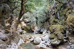 Εξερευνώντας τα μονοπάτια της Ελλάδας: Πεζοπορία στο πανέμορφο Δάσος του Ρούβα (Pics)